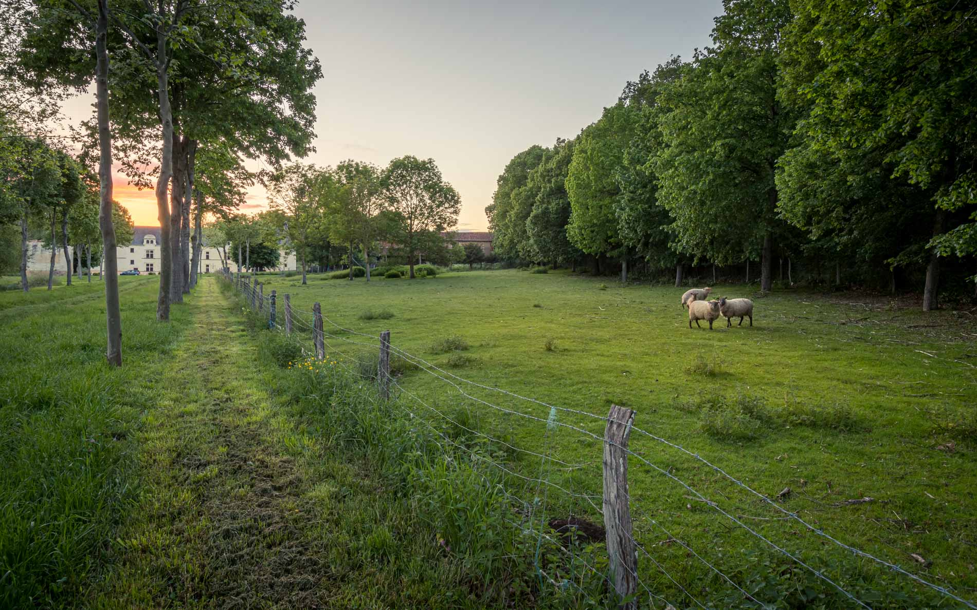 mouterre-silly-village-moutons